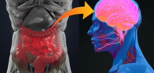 oś mózgowo-jelitowa